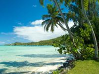 C.H.I.E.F. - Saint Lucia